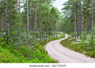 Curvy gravel road through the forest