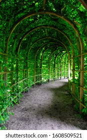 Curvy green plant tunnel in Groningen, Netherlands