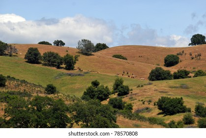 Curvy hills and trees in the summertime with horses eating grass on the knolls
