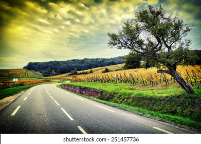Curvy road at autumn sunset. Alsace, Vosges region. Wineroad