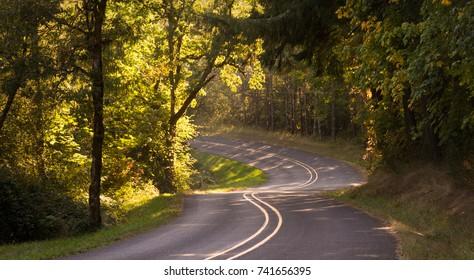 A curvy road descends through a rural woods.