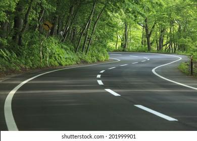 A Curvy Road Of Fresh Green