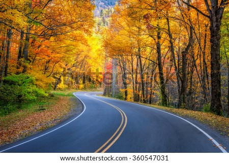 Curvy roadway and fall foliage along US 441 in the Great Smoky Mountains National Park