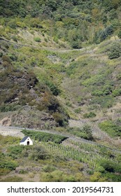 curvy small road through the steep vineyards at the Mosel