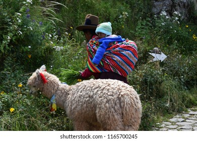 Cusco, Peru, South America-2- May 2018. Peruvian women with her baby on her back and alpaca.