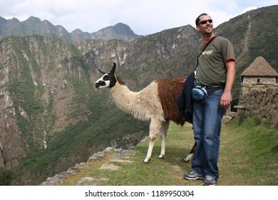 Cusco/Peru-September 28th, 2007:  A tourist meet a guanaco (Lama guanicoe) camelid native to South America, Machu Picchu Peru