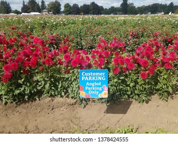 customer parking angled parking only sign and dahlia field