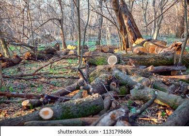 cut branches in the forest