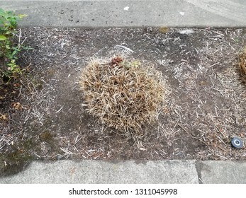 cut brown grass in dirt with grey cement
