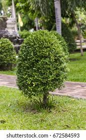 Cut bush