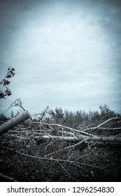 cut down dark forest