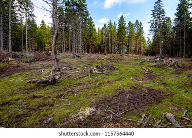 Cut down pest infested forest in mountainous terrain, devastated woods, stumps and dry branches on ground, ecology and deforestation issues concept
