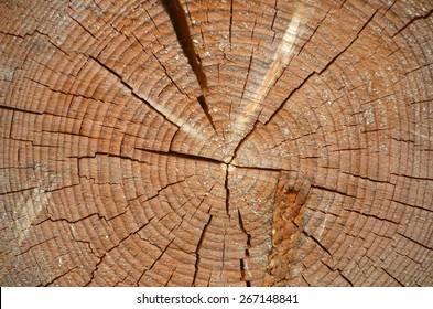cut down a tree
