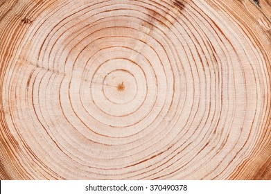 Cut down tree circle rings texture background