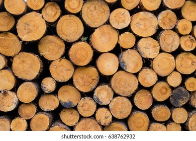 Cut down wood trunks stacked on each other in forest