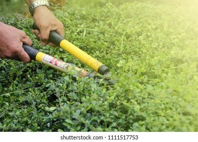 cut the grass, Gardener mowing
