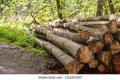 Cut and marked tree logs at the edge of a forest road