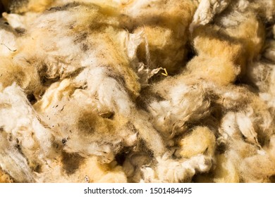 Cut off sheep wool, wool of sheep  after cutting