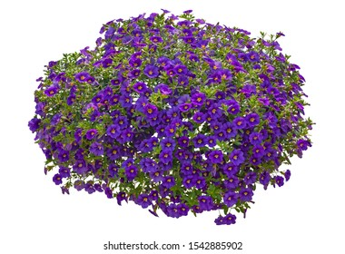 Cut out flowers. Blue flowers isolated on white background. Hanging flowers basket. Flower bed for garden design or landscaping. High quality clipping mask.