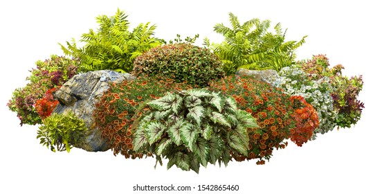 Cut out garden design isolated on white background. Flowering shrub and green plants for landscaping. Decorative shrub and flower beds. High quality clipping mask.
