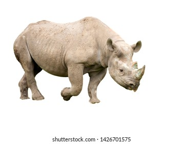 cut out image of a black rhino