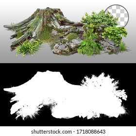 Cut out tree stump. Mossy tree roots. Old tree stub surrounded by green foliage. Dead tree isolated on transparent background via an alpha channel. High quality clipping mask.