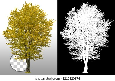 Cut out tree. Yellow tree in fall isolated on transparent background via an alpha channel of great precision. High quality mask without unwanted edge. High resolution for professional composition.