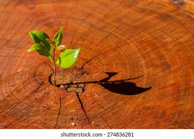 Cut red brown tree stump showing tree rings and a new shoot growing out of it representing new life.