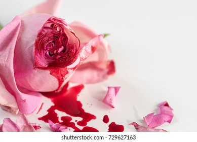 cut rose blossom, blood and petals on a bright gray background, concept for the international day of zero tolerance for female genital mutilation, 6 february, selected focus