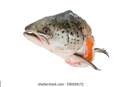 cut salmon head on isolated white background with clipping path