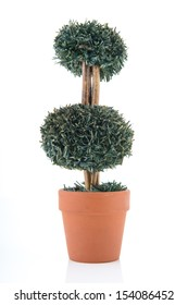 Cut shrub in flower pot