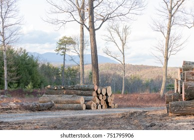 Cut and Stacked Trees ready to be made into lumber, on a Mountain Top in Upstate New York with Catskill Mountain Views.