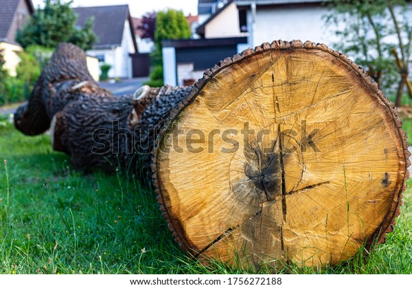 A cut tree. A big piece. Cleaning up the city garden. Material for the sawmill.