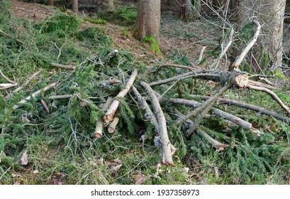 cut tree branches trimmed, South Bohemia, Czech Republic