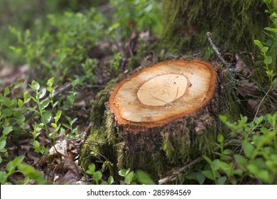 Cut tree in the forest, photographed with very shallow depth of field.