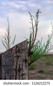 cut tree with green shoots