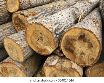 Cut tree logs piled up