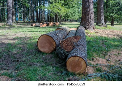 Cut tree logs in a public park Oregon state.