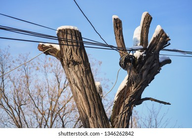 Cut tree and messy interlaced electric cables hanging on it
