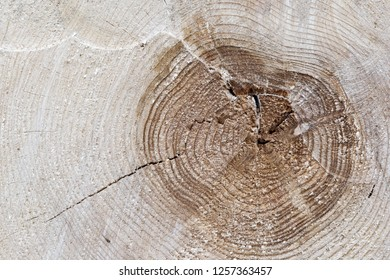 A cut tree trunk with growth rings.
