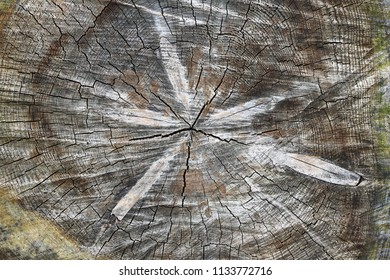 Cut tree trunk - texture of wood - annual rings