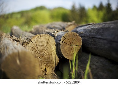 Cut tree trunks lying on ground with annual rings visible.