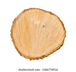 Cut tree wood with rings and texture on a white background. Felled tree slice.
