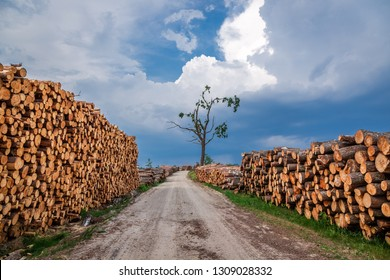 Cut wood after a gale in summer
