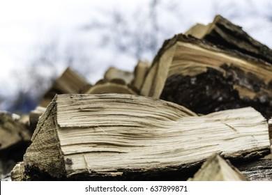 Cut wood and brown bark