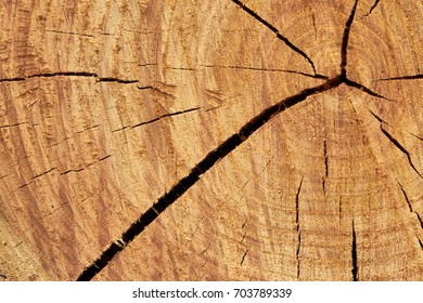 cut of a wooden deck of oak, on which the structure of a tree is visible