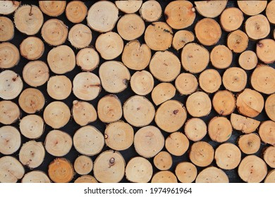 Cut wooden rings, decoration wall panels texture background