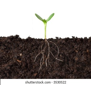 Cutaway of a seedling growing in dirt, profiled against white,