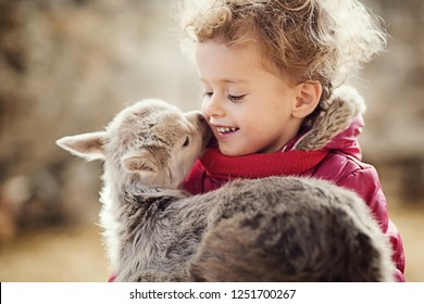 Cute 3 Year Old Girl Holding Kid Goat In Arms. Winter In Barn.