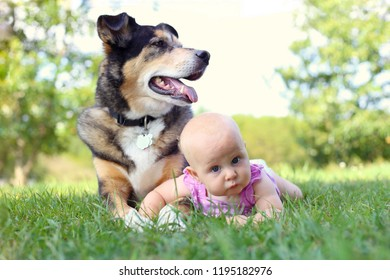 A cute 6 month old baby girl is laying outside in the grass hugging her German Shepherd Dog.